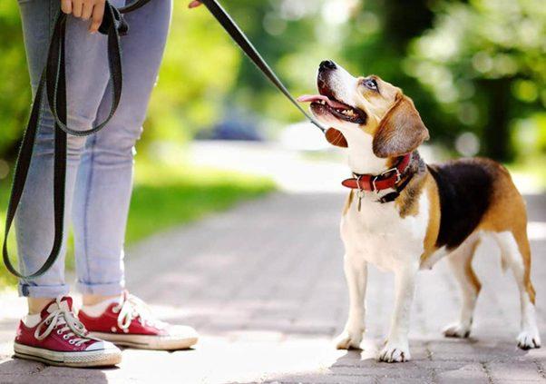 Giới thiệu shop chó mèo Dogparadise - thiên đường cho thú cưng